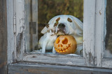 Dog dressed like a ghost and little kitten with a halloween pumpkin - 228658578