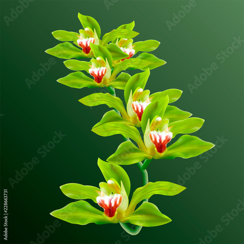 Green Orchid Flowers in branch Vector isolated on background. 3d realistic Vector Orchids Illustration for poster, card, invitation, commercial.