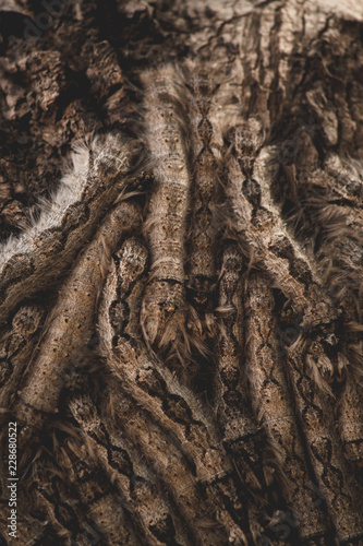 Worms in tree - 228680522