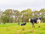 北海道 標茶町 牧場 牛 - 228680784