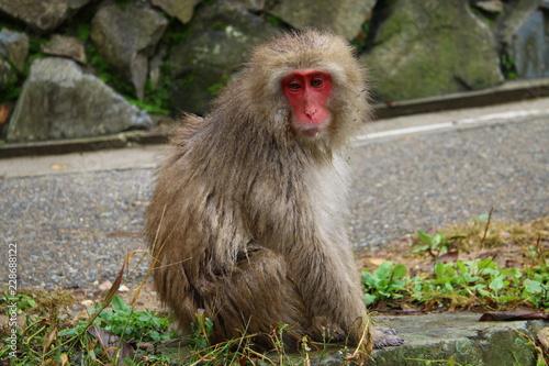 Naklejka 猿