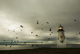 Fantastic picture of the lighthouse on the ocean. A flock of birds and a dramatic sky.  - 228696340