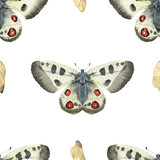 Watercolor seamless pattern Apollo butterfly