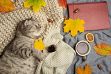 Lazy cat sleeping. Conception of heat, rest, winter, autumn, comfort