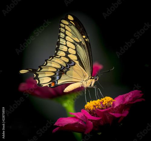 butterfly on flower - 228758159