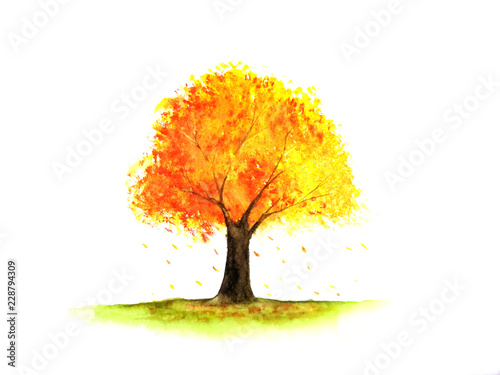 watercolor tree autumn season.yellow,orange and red leaf.isolated white background.  © atichat