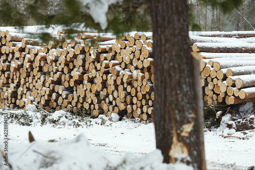Pile of wood logs in the forest in winter. Logging industry. - 228804153