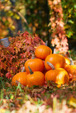 pumpkins in garden grass. Halloween and autumn background - 228812564