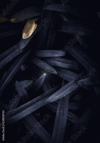 beautiful black leaves