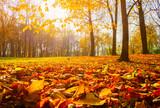 Autumn trees in sunny autumn park lit by sunshine - sunny autumn landscape in bright sunlight - 228838396