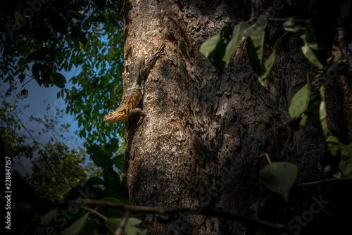 Lizard upside down in a tree. - 228847157