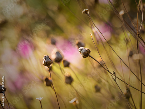 Autumn dry flowers and plants - 228856180