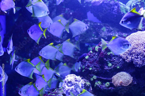 Beautiful colored fish in the water. Underwater world - 228874109