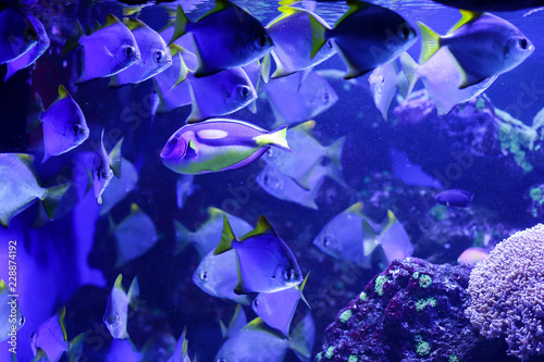 Leinwandbild Motiv Beautiful colored fish in the water. Underwater world
