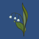 Hand drawn Lily of the valley, vector