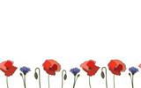 Seamless border poppy cornflower, vector
