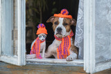 Funny dog and kitten dressed in a knitted hats and scarfs sitting near the window