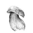 white mushroom on thick stalk, sketch vector graphic monochrome illustration on white background
