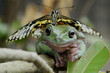 Friendships - Butterfly on frog