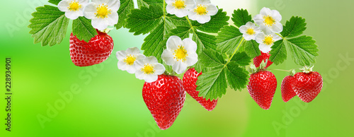 Wall mural beautiful strawberries background with ripe red berries