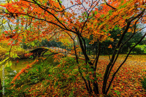 Fridge magnet Scenic view of misty autumn landscape with beautiful old bridge in the garden with red maple foliage.