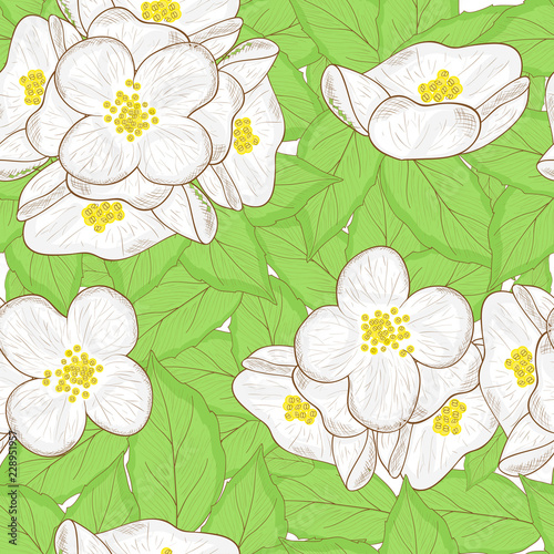 Yellow Jasmine Flower Drawing