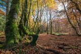 Forêt en automne - 228954515