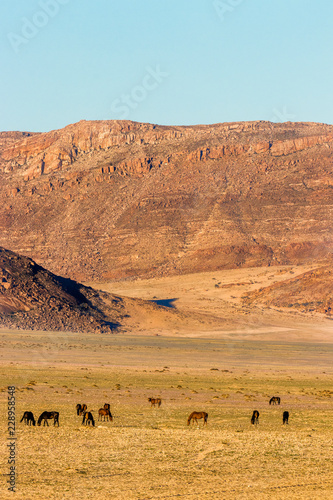 Wild horses in Aus, Namibia.