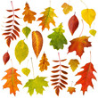Big collection of beautiful dry autumn leaves isolated on white background
