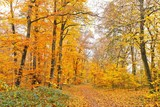 Autumn forest - 228989980