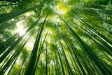 Fototapeta Bambus - Arashiyama bamboo forest in Kyoto, Japan. © BUSARA