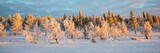 Snowy panoramic landscape, frozen trees in winter in Saariselka, Lapland, Finland - 228998173