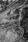 Treppe und Wurzeln am Kiesstrand