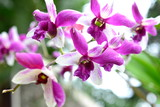 Orchid in the jungle of Thailand
