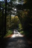 Wanderweg durch Wald im Herbst - 229050758