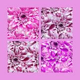 Digital design created with dahlia flowers