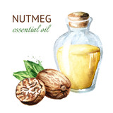 Nutmeg essential oil. Watercolor hand drawn illustration  isolated on white background - 229057335