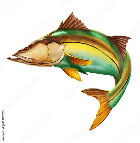 Snook Common Fish Mounts on white - 229076753
