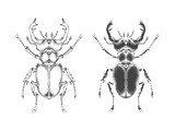 Vector illustration with hand drawn stag beetle. Two variants of insect: outline and silhouette. In realistic style.