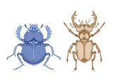 Vector illustration with hand drawn two insects: stag beetle and scarab. Color image in realistic style.