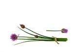 garden chive stalks and flowers on white background with copy space above - 229105363