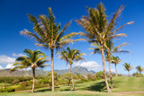 Palm Trees At Golf Course, Kauai