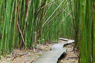 Hawaiian Bamboo Forest, Maui © IndustryAndTravel