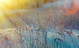 Winter scene - 229119940