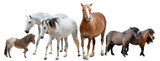 horses and ponies - 229134173