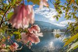 Springtime in Bergen, Norway - 229146938