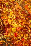 Abstract autumn painting art background. Multicolored bright texture. Contemporary art. Oil painting on canvas. Fragment of artwork. Spots of oil paint. Brushstrokes of paint. Modern art.