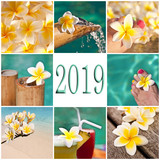 2019, swimming pool and plumeria collage - 229162941