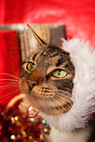 Tabby Cat with Santa Hat sideways on her head. She is shown against a red Christmas background