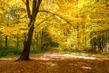 nice autumn forest - 229194153
